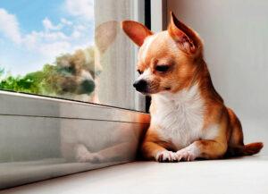animais em condominios